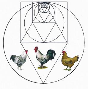 79.Chicken logo